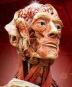 BodyWorlds Headshot